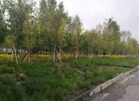 新疆園林綠化報價表樣本