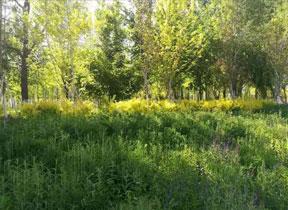 新疆園林景觀網