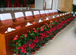新疆花卉租賃